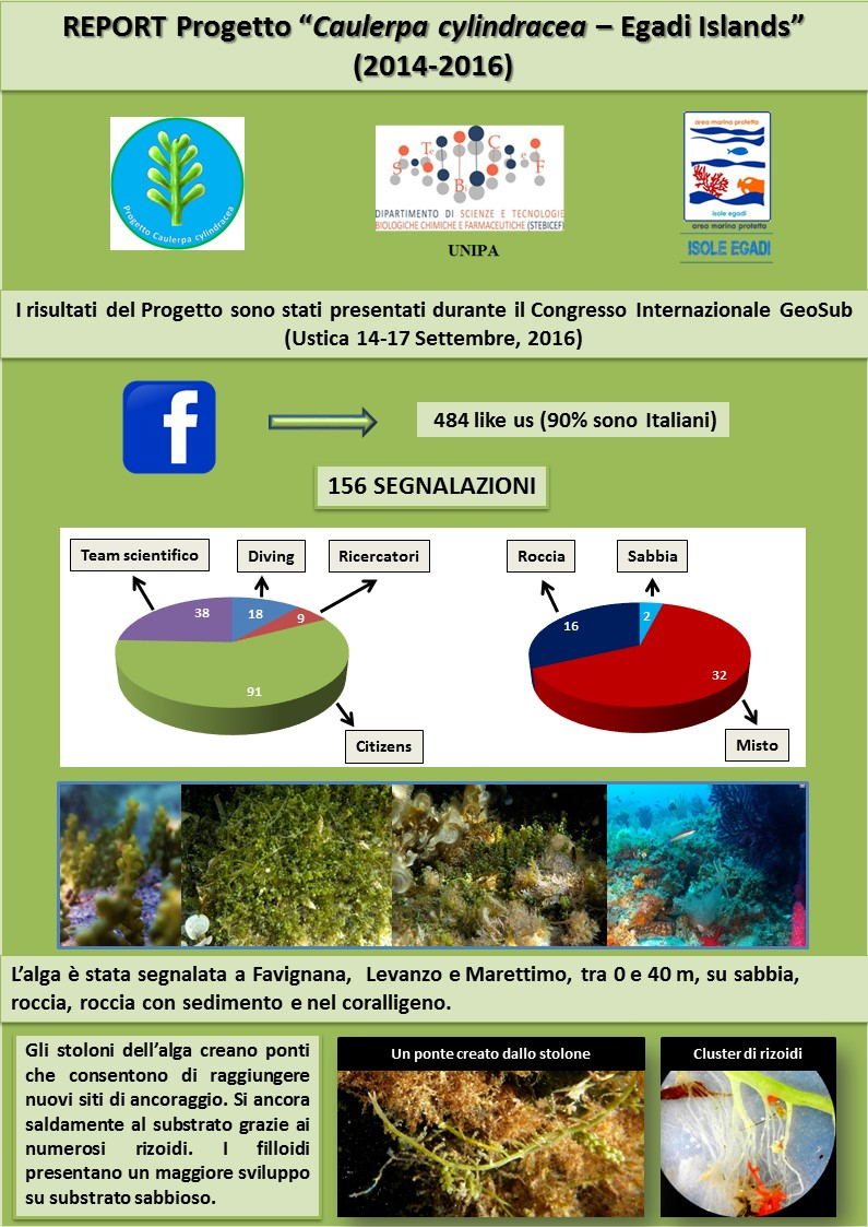 report-progetto-caulerpa-cylindracea-egadi-islands