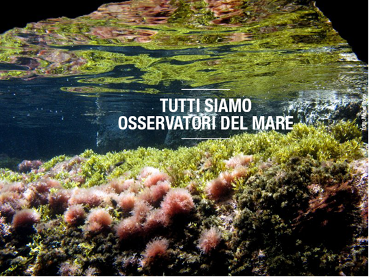 citizen-science-platform-observador-del-mar-seawatchers-italia-alghe-aliene